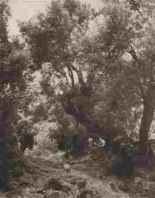 GEORGE HOYNINGEN-HUENE - Olive Trees in the Sacred