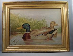 Antique Mallard Drake Duck by Alexander Pope