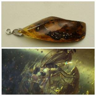 2.5 g. Natural Baltic amber pendant inclusion insects