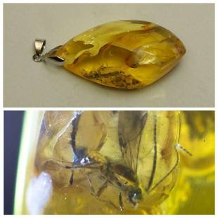 Natural Baltic amber facted pendant inclusion insect