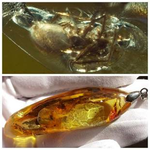 18g Natural Baltic amber spider pendant inclusions