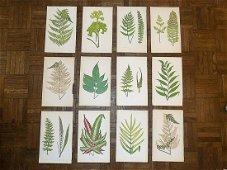 Antique 19th Century Botanical Wood Engravings - Ferns