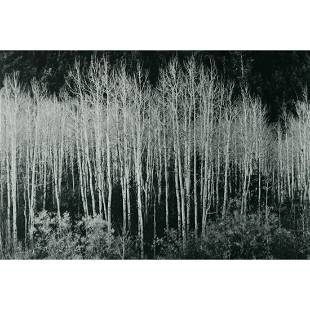 ANSEL ADAMS - Aspens, Autumn, 1937