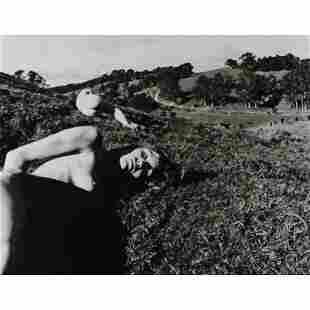 PAUL COX - Nudes in the Field