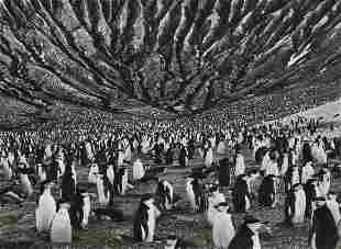 SEBASTIAO SALGADO - Chinstrap Penguins