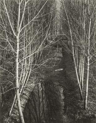 PAUL STRAND - Trees, Winter, River Po, Italy 1952