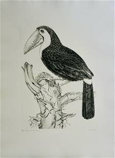 Jack Coutu - Sulphur Breasted Toucan