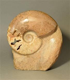 High-polish Ammonite - self-standing - Lytoceras sp.