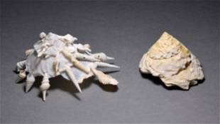 A collection of fossil and recent gastropods -