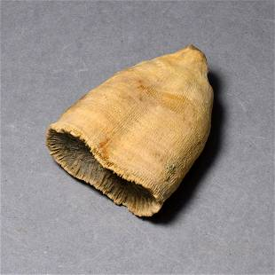 Fine fossil coral - Pattalophyllia sinuosa