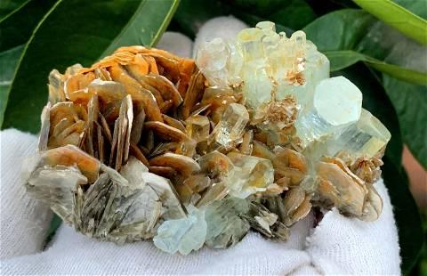 Exquisite Aquamarine Crystals Bunch With Golden MIca
