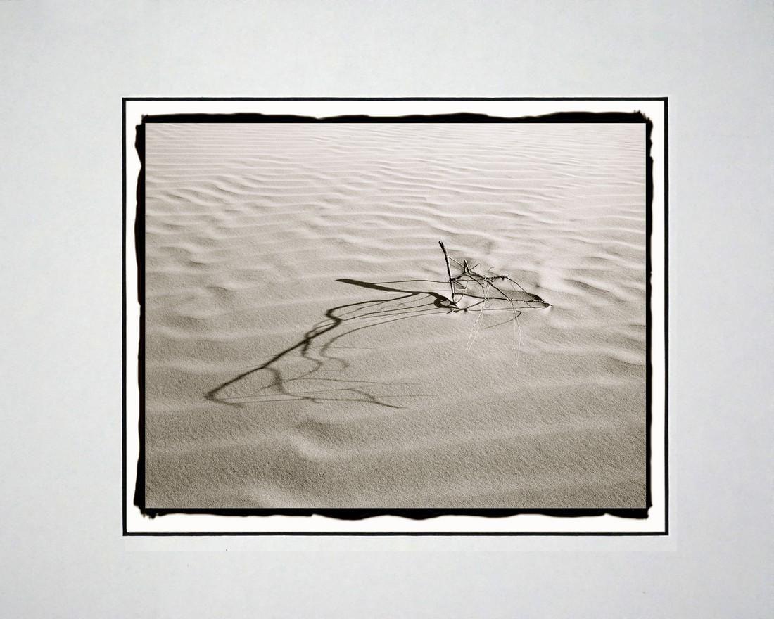 Barbara A. Leideritz - Branches in Dune