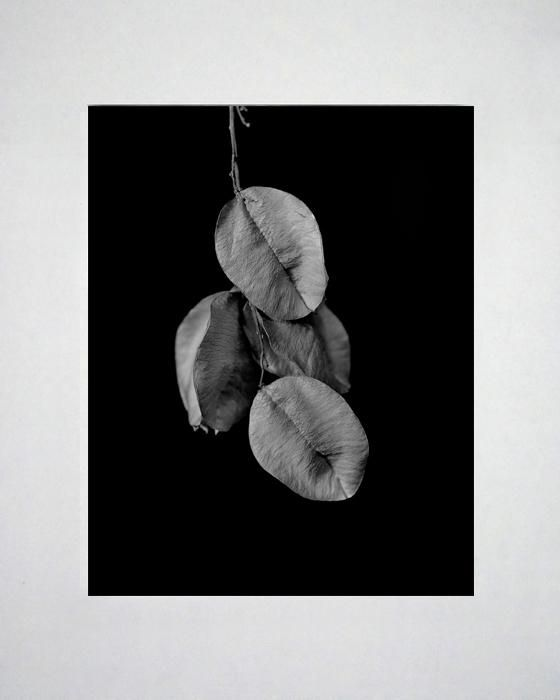 Barbara A. Leideritz - Seed Pods