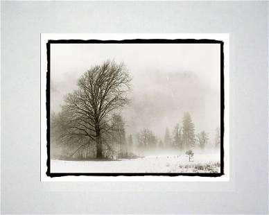 Ludo Leideritz - Trees and Mist