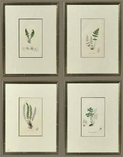 John E. Sowerby - Botanical Etchings