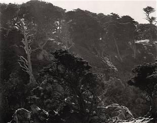 EDWARD WESTON - Fog & Cypress, 1938