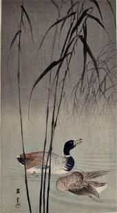 Yamamoto Shoun: Mallard Ducks