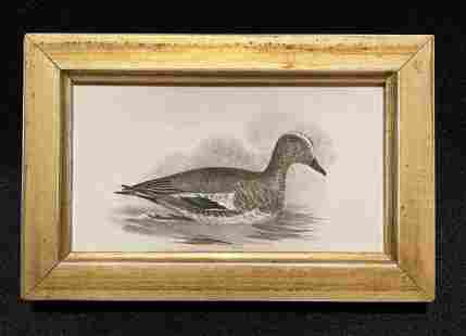1844 hand colored waterfowl engraving