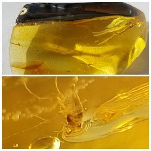 Natural Baltic amber pendant inclusions insect fly