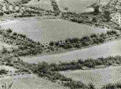 MANUEL ALVAREZ BRAVO - Snow Field of Agaves, 1970