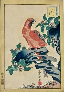 Sugakudo: Macaw and Aloe