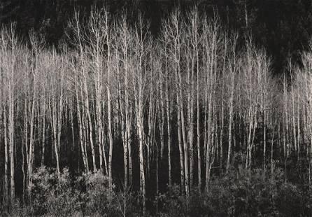 ANSEL ADAMS - Aspens, Autumn,1937