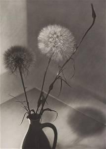 ELSBETH M. HEDDENHAUSEN - Dandelions, ca 1936