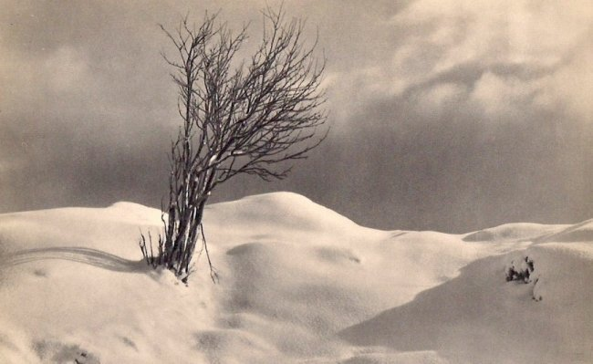 John Myren: Tree in Snow