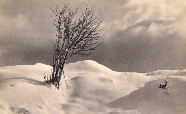 John Myren: Tree in Snow