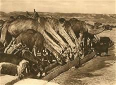 Karl Grober: Camels