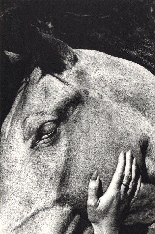 Ralph Gibson: Horse