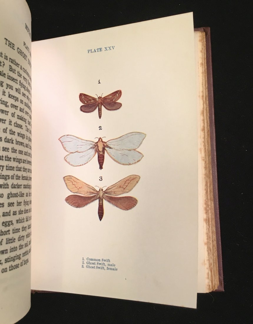 Butterflies and Moths by Janet Harvey Kelman, 1912 - 3