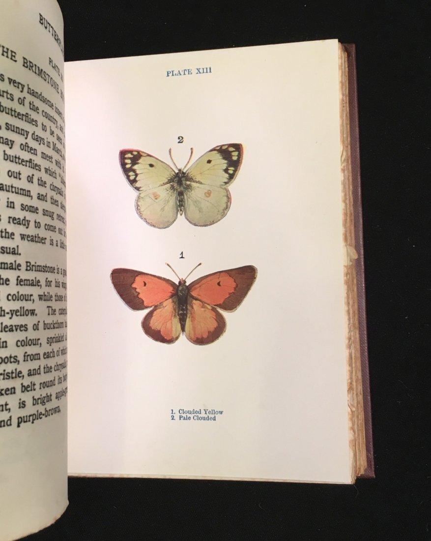 Butterflies and Moths by Janet Harvey Kelman, 1912 - 4