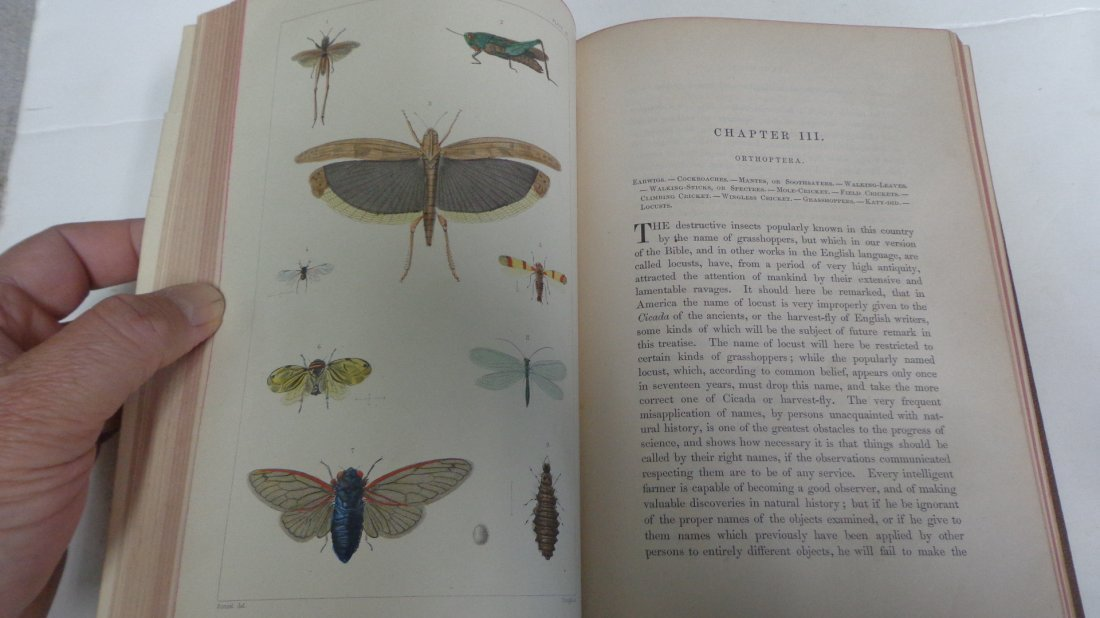 Insects Injurious to Vegetation by T. Harris, 1890 - 3
