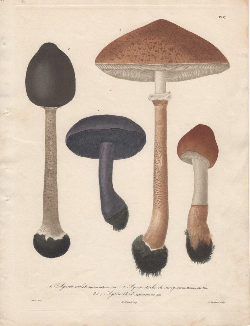 Mushrooms, Joseph Roques 1864