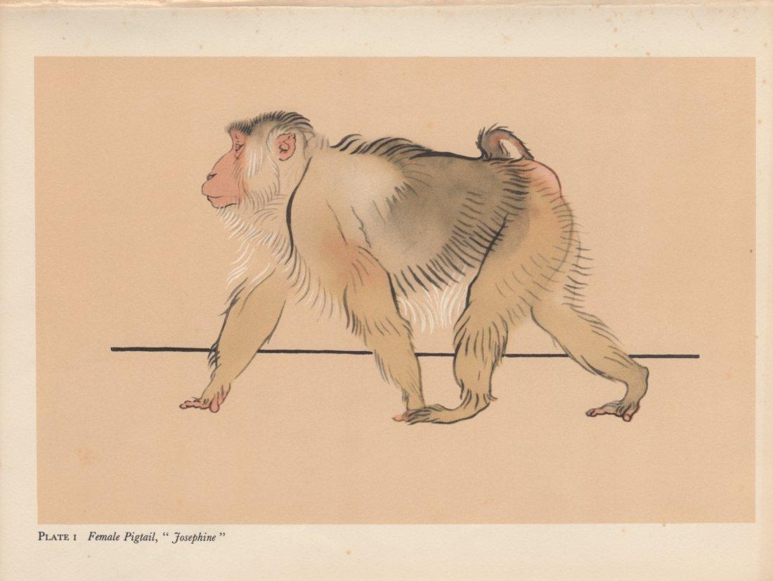 "Female Pigtail ""Josephine"" 1900"