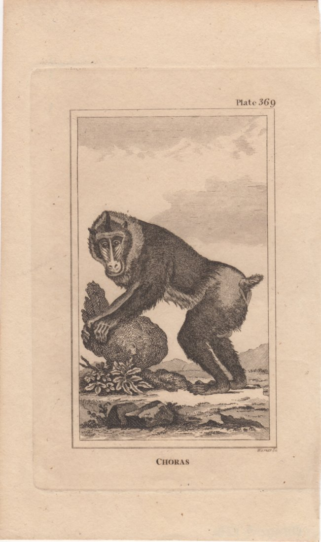 Choras, Warner 1812