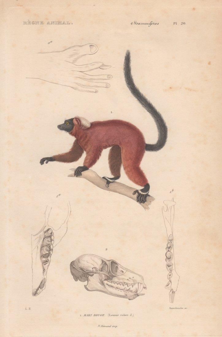 Maki Rouge, Christophe Annedouche 1828