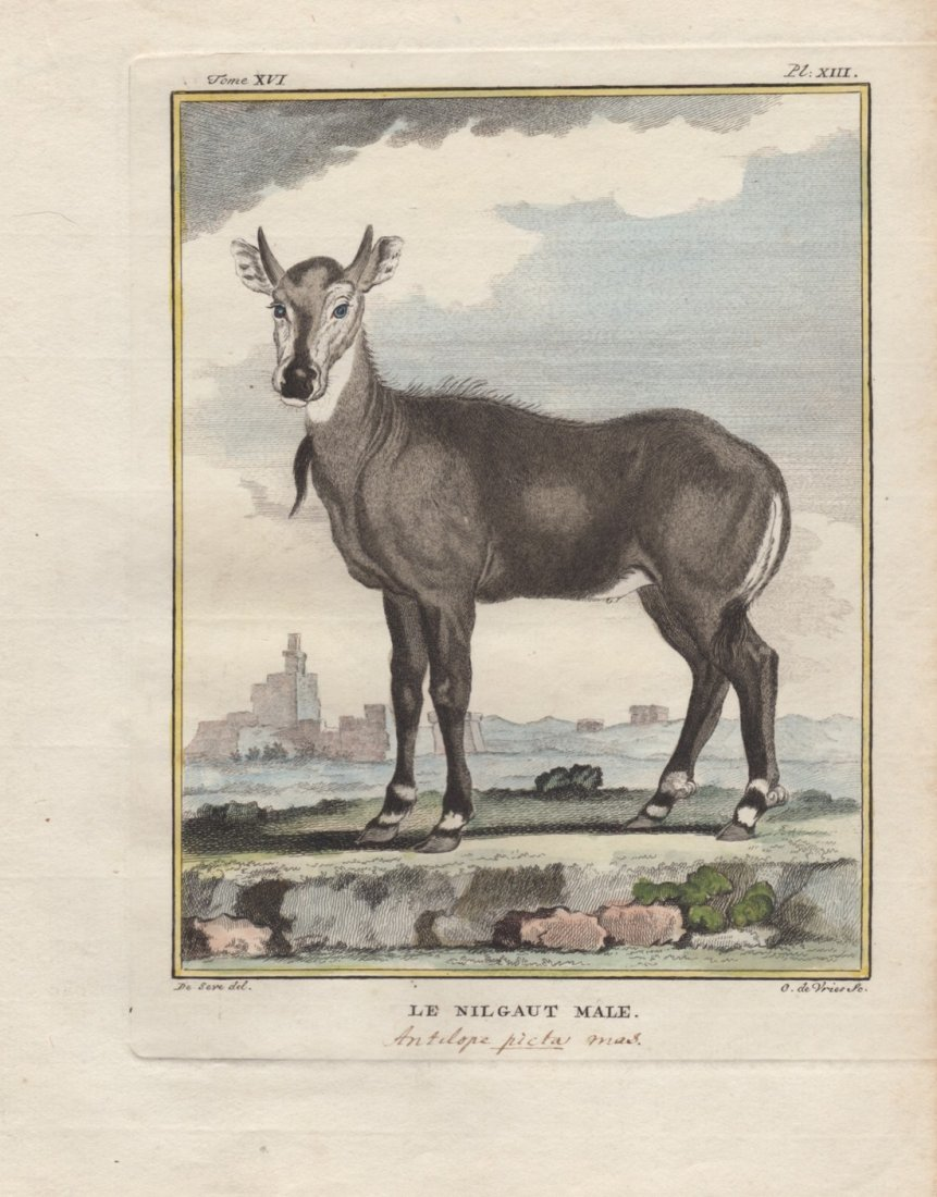 Le Nilgaut Male, Jacques De Seve 1778-81
