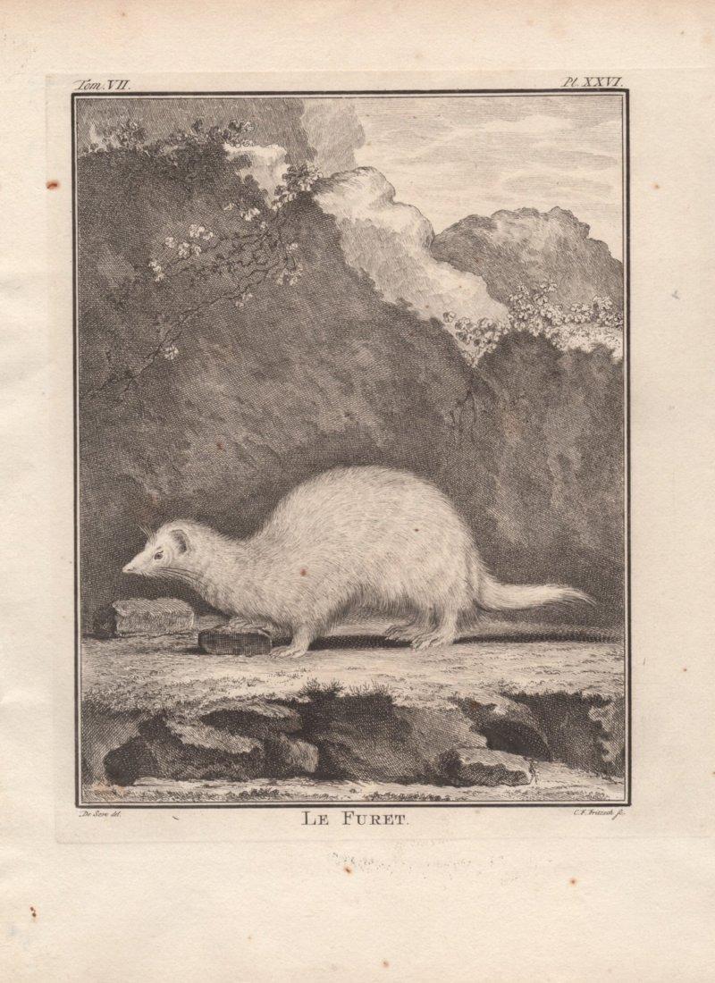 Le Furet, Jacques De Seve 1778-81
