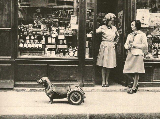 Robert Doisneau: Dog on Wheels