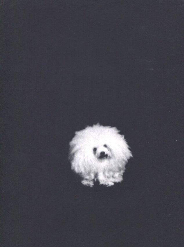 Henry Waxman: Black & White