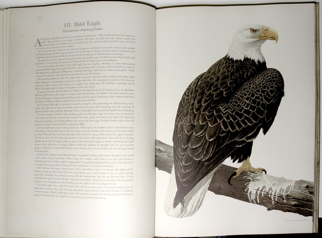 Some Birds & Mammals of N. America by Axel Amuchastegui - 7