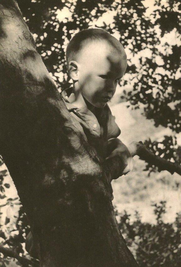 Wayne Miller: Boy in Tree