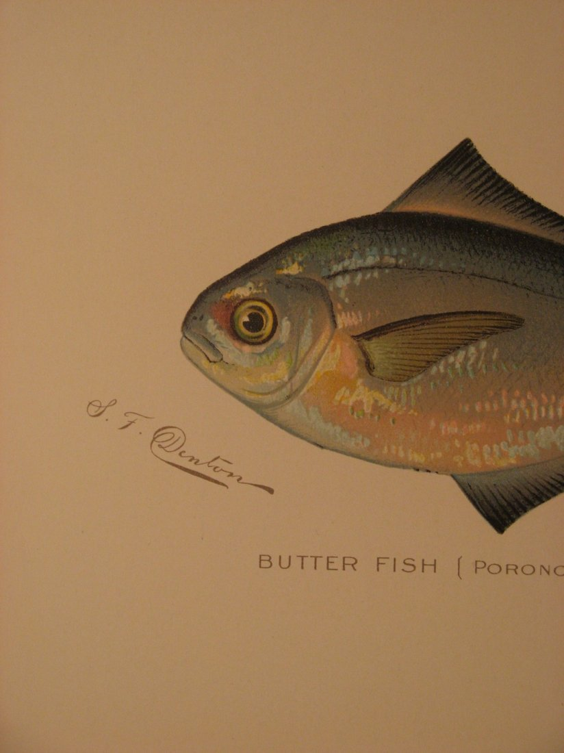 Sherman Denton: Butterfish, 1904 - 2