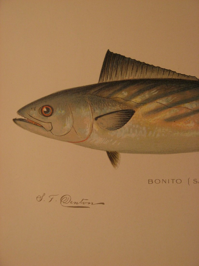 Sherman Denton: Bonito, 1904 - 2