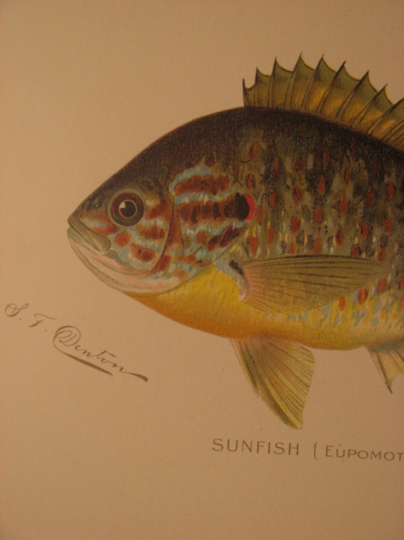Sherman Denton: Sunfish, 1904 - 2