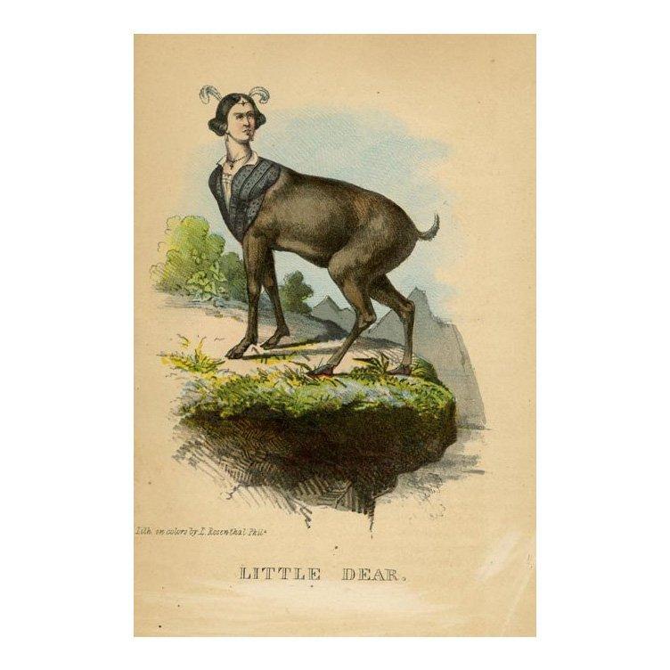 Henry Stephen: Little Dear 1851