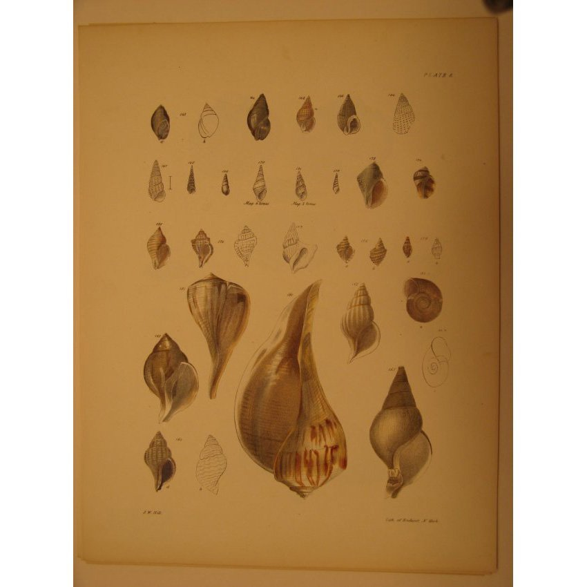James De Kay: Plate 8 - Shells, 1843