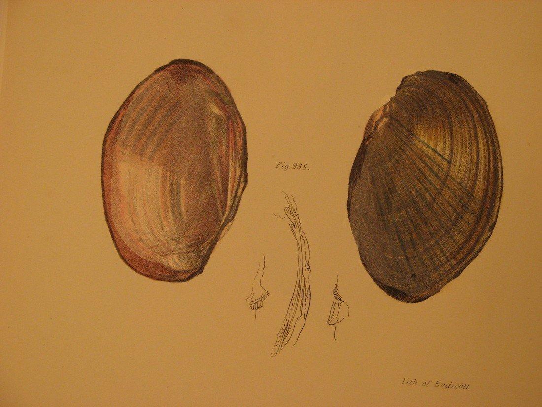 James De Kay: Plate 19 - Shells, 1843 - 2
